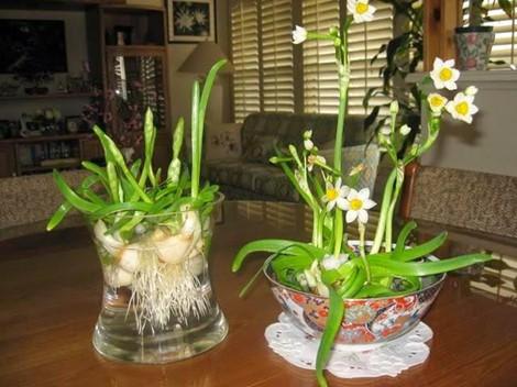 Thời gian trồng hoa để nở đúng vào dịp Tết - Ảnh 3.