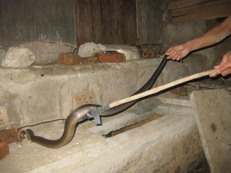Muốn rắn không vào nhà bạn, hãy thử những cách này - Ảnh 5.