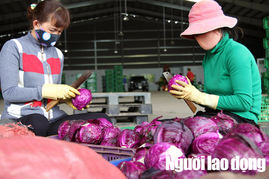Cận cảnh hơn 40 tấn hoa, rau Đà Lạt gửi tặng Trường Sa - Ảnh 5.