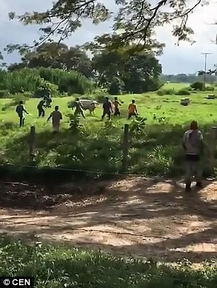 Venezuela: Người dân ném chết gia súc để lấy cái ăn - Ảnh 1.