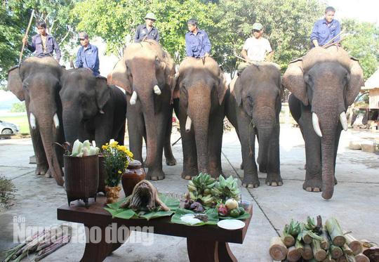 Độc đáo lễ cúng sức khỏe cho voi - Ảnh 1.