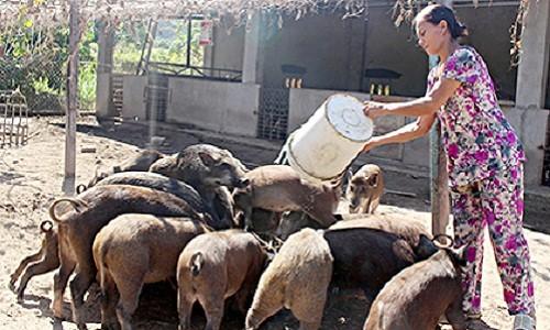 """Về tận làng quê """"khuân"""" lợn rừng, gà chân voi... ăn Tết - Ảnh 1."""