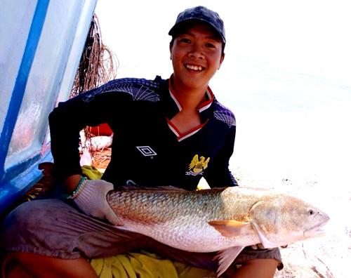 Cá 6 kg nghi sủ vàng quý hiếm ở miền Tây - Ảnh 1.