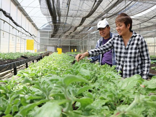 Nông dân ngoại ở Đà Lạt - Báo Người lao động