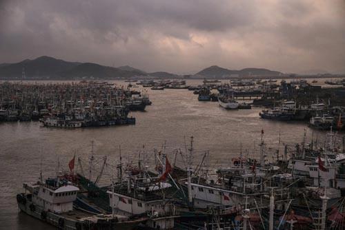 Tàu cá Trung Quốc lộng hành (*): Vét cạn biển Tây Phi - Ảnh 1.