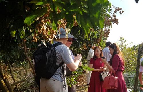Úc kiểm tra, đánh giá vùng trồng nhãn của Việt Nam - Ảnh 1.