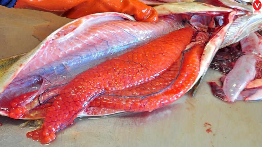 Cận cảnh thu hoạch trứng cá hồi siêu đắt ở Nhật Bản - Ảnh 9.