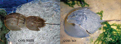 Tránh xa những loại hải sản có lượng độc tố cao gây chết người - Ảnh 2.
