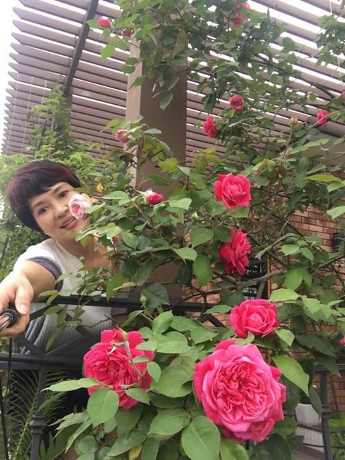 Ngắm ban công nhỏ xinh đầy hoa hồng của bà mẹ Hà Nội - Ảnh 1.