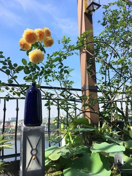 Ngắm ban công nhỏ xinh đầy hoa hồng của bà mẹ Hà Nội - Ảnh 4.