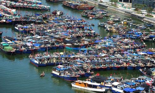 Tàu cá Trung Quốc lộng hành (*): Lật mặt nạ dân quân biển - Ảnh 1.