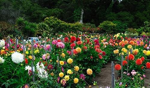 8 loài hoa đẹp bình dị, dễ trồng cho sân vườn nhà phố - Ảnh 7.