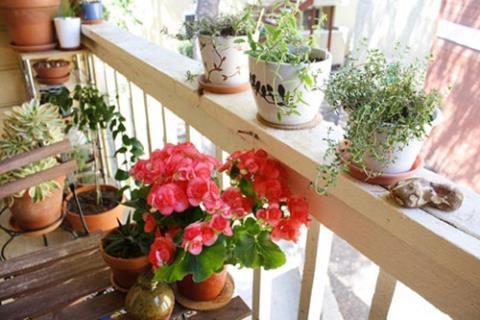 Khu vườn thơm ngát hương hoa, rau củ của Bằng Kiều - Ảnh 20.