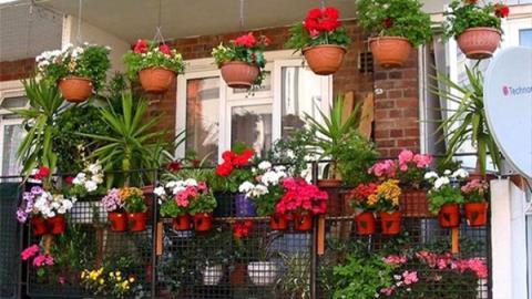 Khu vườn thơm ngát hương hoa, rau củ của Bằng Kiều - Ảnh 21.