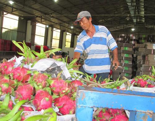Trung Quốc siết nhập khẩu trái cây từ Việt Nam - Ảnh 1.