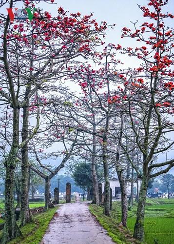Đẹp nao lòng mùa hoa gạo tháng Ba - Ảnh 10.