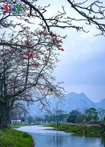 Đẹp nao lòng mùa hoa gạo tháng Ba - Ảnh 12.