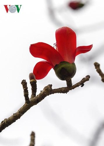 Đẹp nao lòng mùa hoa gạo tháng Ba - Ảnh 6.