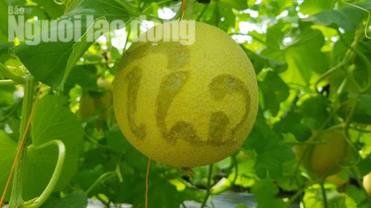 Độc đáo dưa lưới khắc chữ, số mừng ngày 8-3 - Ảnh 4.