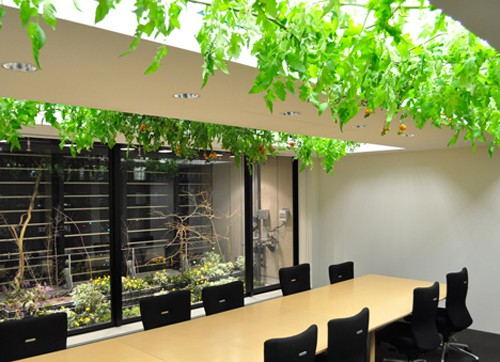 Ruộng lúa chín vàng óng trong văn phòng công ty Nhật - Ảnh 10.
