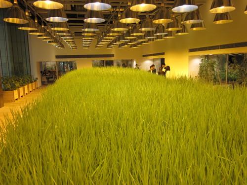 Ruộng lúa chín vàng óng trong văn phòng công ty Nhật - Ảnh 3.