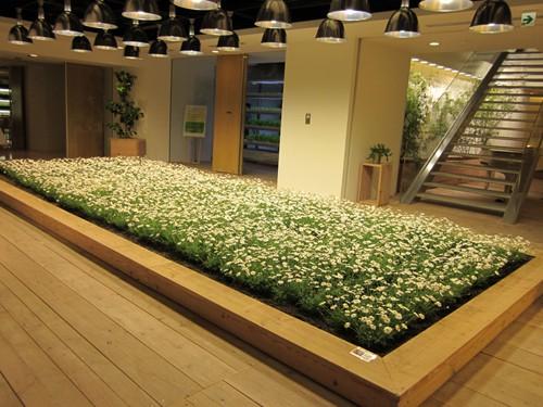 Ruộng lúa chín vàng óng trong văn phòng công ty Nhật - Ảnh 8.