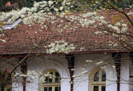 """""""Điểm danh"""" những mùa hoa tháng 3 đẹp mê hồn - Ảnh 1."""