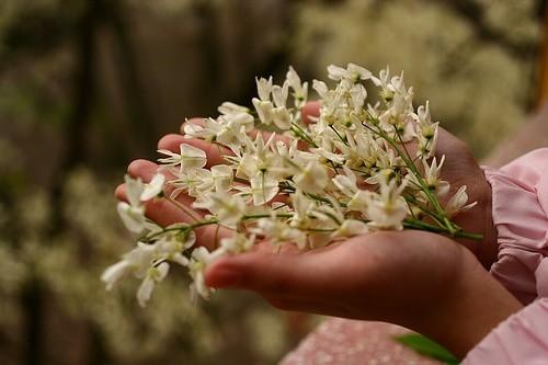 """""""Điểm danh"""" những mùa hoa tháng 3 đẹp mê hồn - Ảnh 2."""