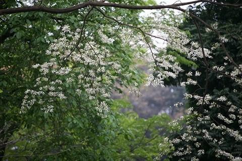 """""""Điểm danh"""" những mùa hoa tháng 3 đẹp mê hồn - Ảnh 6."""