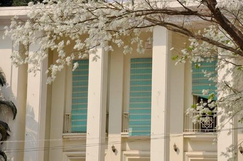 """""""Điểm danh"""" những mùa hoa tháng 3 đẹp mê hồn - Ảnh 8."""
