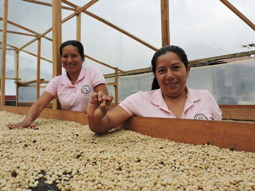 Quyết khởi nghiệp với cà phê organic - Ảnh 1.