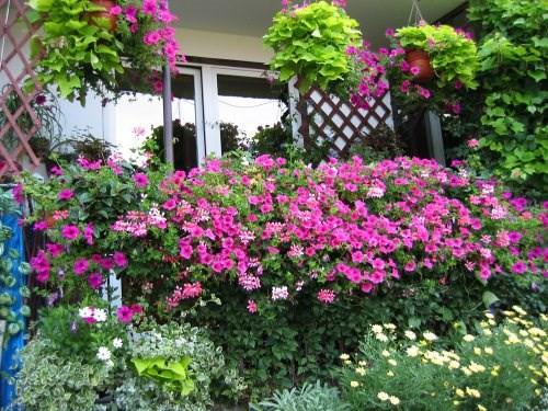 Mê mẩn những ban công đầy hoa dại tuyệt đẹp - Ảnh 3.