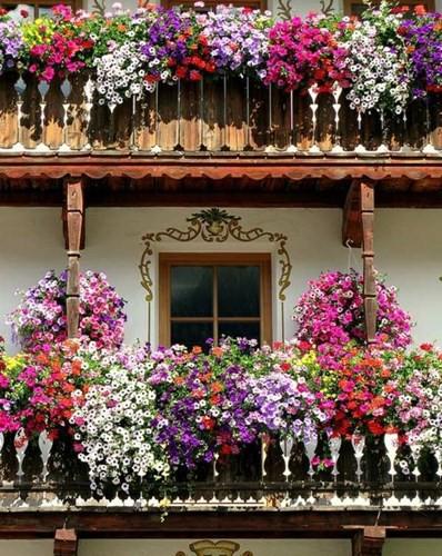 Mê mẩn những ban công đầy hoa dại tuyệt đẹp - Ảnh 7.