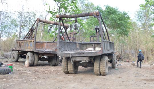 Vụ Phượng râu: Gia đình Chi cục trưởng Kiểm lâm Đắk Lắk giao nộp 8 m3 gỗ - Ảnh 2.