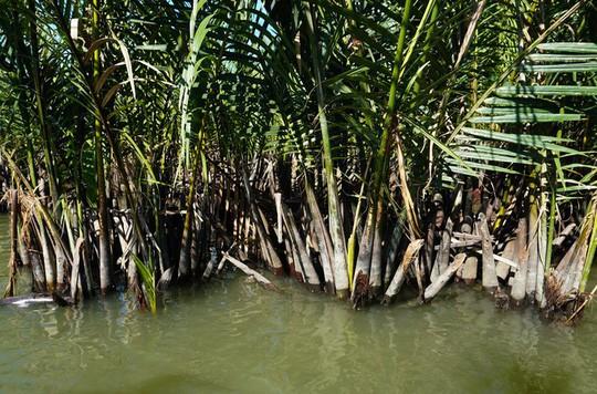 Khu rừng dừa như miền Tây sông nước tại Hội An - Ảnh 2.
