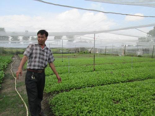 TP HCM có gần 900 ha rau củ quả VietGAP - Ảnh 1.