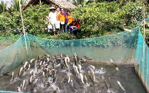 Du khách kéo ra cồn giữa sông Hậu xem cá lóc bay - Ảnh 3.