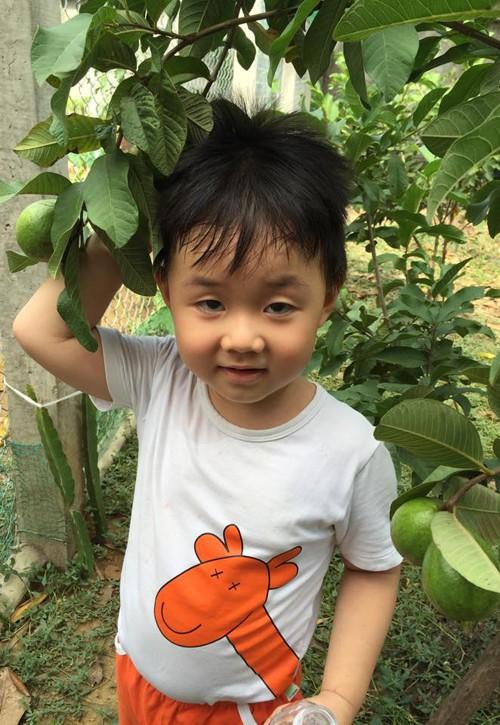 Phát thèm khu vườn sai trĩu quả của diễn viên Lê Phương - Ảnh 14.