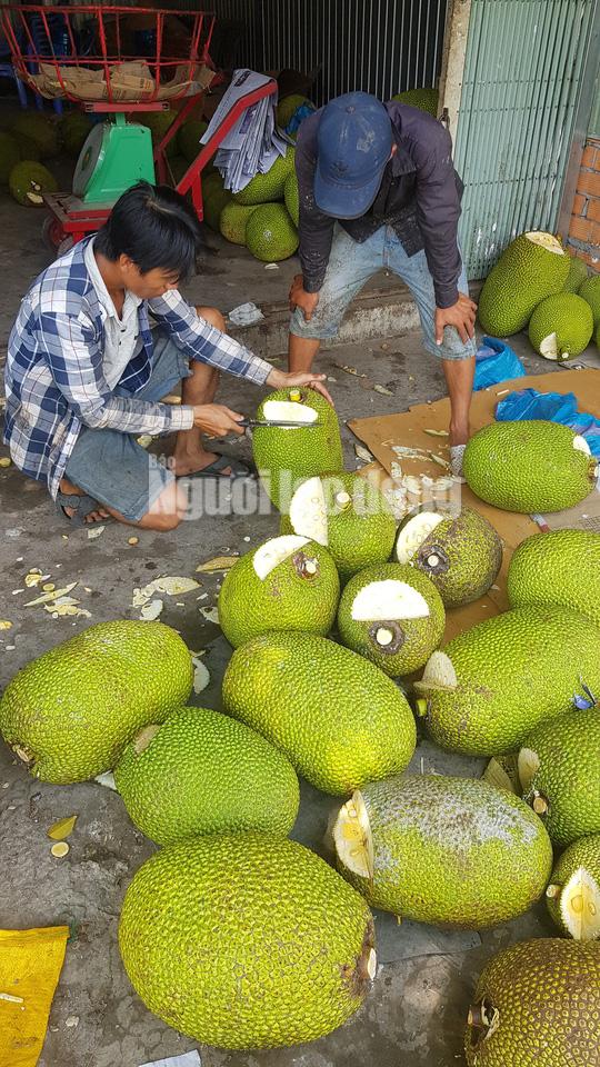 Vào mùa thu hoạch rộ, giá mít Thái siêu sớm giảm sâu - Ảnh 1.