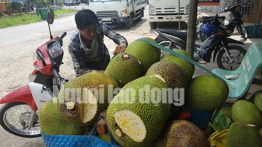 Vào mùa thu hoạch rộ, giá mít Thái siêu sớm giảm sâu - Ảnh 3.