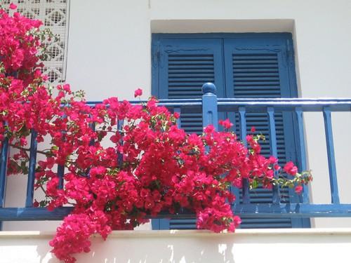 Chết lịm trước những ngôi nhà cổng hoa giấy đẹp tuyệt - Ảnh 11.