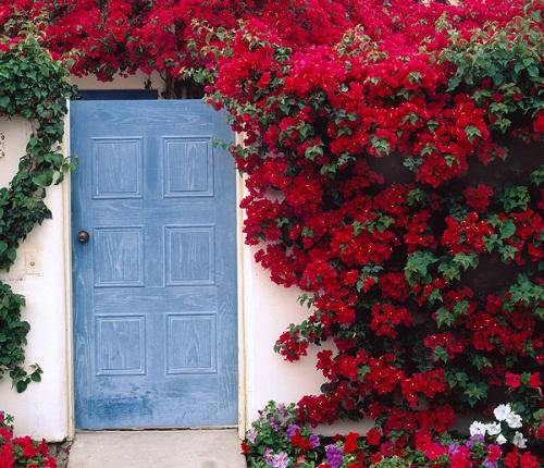 Chết lịm trước những ngôi nhà cổng hoa giấy đẹp tuyệt - Ảnh 12.
