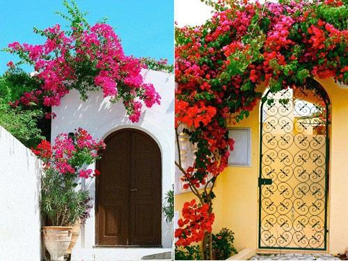 Chết lịm trước những ngôi nhà cổng hoa giấy đẹp tuyệt - Ảnh 4.