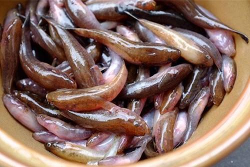Cá bống thệ - món tiến vua của người dân xứ Huế - Ảnh 1.
