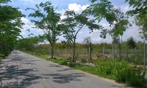 Bỏ hơn 600 triệu mua miếng đất chỉ có thể trồng rau - Ảnh 1.