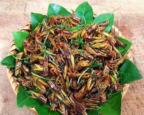 Ngã bổ ngửa với đặc sản côn trùng vùng cao Tây Bắc - Ảnh 5.