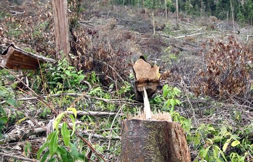 Tan hoang rừng phòng hộ ở Lâm Đồng - Ảnh 1.