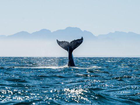 Lạc xuống thủy cung với loạt ảnh đại dương đẹp ngỡ ngàng - Ảnh 3.