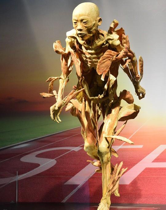 Cục Mỹ thuật nói gì về triển lãm cơ thể người ở TP HCM? - Ảnh 2.