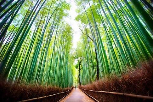 Khám phá những khu rừng đẹp nhất thế giới - Ảnh 1.